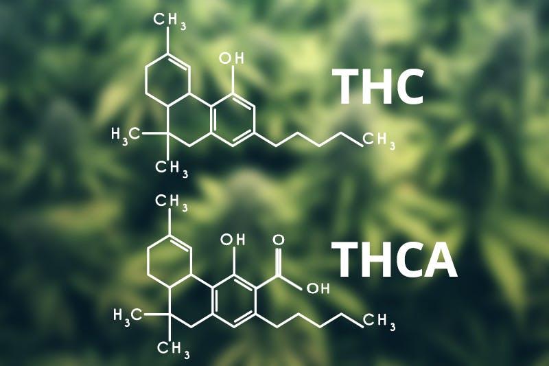 THC THCA